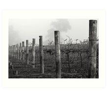 Foggy Vineyard Art Print