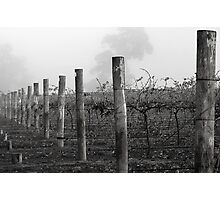 Foggy Vineyard Photographic Print