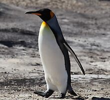 Unbelievable King Penguin
