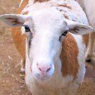 Sheepish by ©Dawne M. Dunton