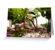 GLASSWING BUTTERFLY . Greeting Card