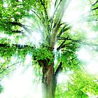 light through the leaves by Jonathan Blades