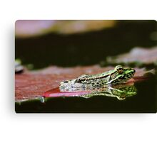 frog in the mirror -II- Canvas Print