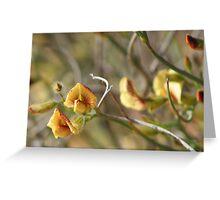 Yellow and Red Pea Flower,Coolgardie. West Australia Greeting Card