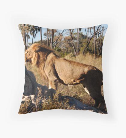 Morning hunt - Male Lion, Okavango delta Throw Pillow