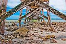 Pier Support by Andrew Dickman