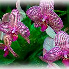 Orchids by mrthink
