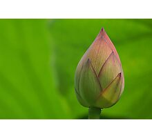 New Lotus shoot Photographic Print