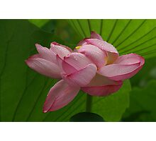 Sculpted Lotus Photographic Print