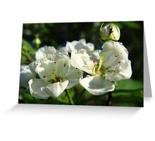 White Bloomers Greeting Card