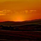 Sun Impression by Mary Ann Reilly