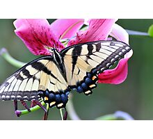 Lily Nectar Luncheon Photographic Print