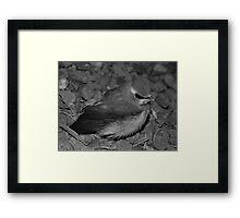 Lil' Bird Framed Print