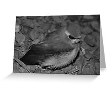 Lil' Bird Greeting Card
