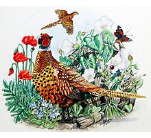 Pheasant Photographic Print