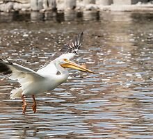 Landing Gear Down by Thomas Young