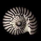 Tiny Shell by Sue Hammond