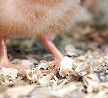 Itty Bitty Feet by Ann Rodriquez