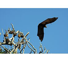 The Macabre in Flight Photographic Print