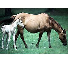 Mama and the Colt Photographic Print