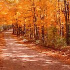 Orange Country Road by NatureGreeting Cards ccwri