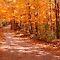 Glorious Autumn Landscapes!