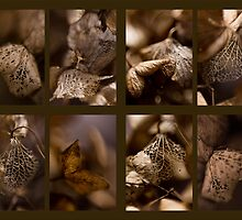 Hydrangea Study by Lorraine Creagh