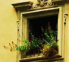 Rococo style Italian window overflowing flowers by creativetravler