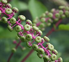 Green Berry by CrisPizzio