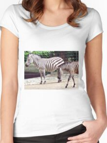 Zebras from the Berlin Zoo 2007 Women's Fitted Scoop T-Shirt