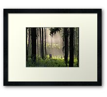 Enchanted Forest (Flathead National Forest, Montana, USA) Framed Print