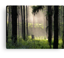 Enchanted Forest (Flathead National Forest, Montana, USA) Canvas Print