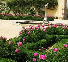 White and Pink Roses in a formal rose garden with fountain by creativetravler