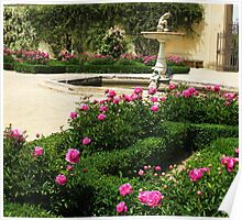 White and Pink Roses in a formal rose garden with fountain Poster