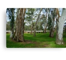River Bank, Euroa Canvas Print