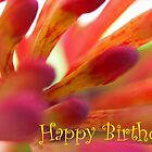 Happy Birthday - Firecracker Greeting Card by Susan Brown