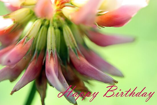 Happy Birthday - Clover Legs Greeting Card by Susan Brown