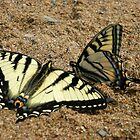 Butterflies at Windy Lake by Janet Young