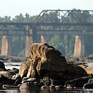 Congaree Rock by ericb