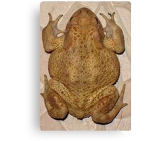 Overhead Anatomy Of a Bufo Bufo Toad Canvas Print