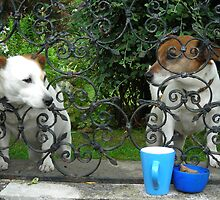 Tea for two? by pix-elation