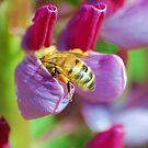 Bee!!!! by loiteke