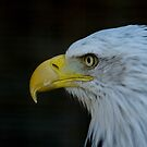 Wildlife by laurav