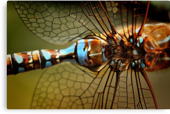 Dragonfly Patterns by Barbara  Brown