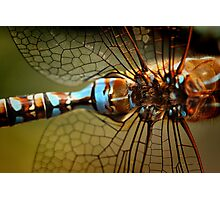 Dragonfly Patterns Photographic Print