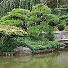 The Japaniese garden in Brookline by loiteke