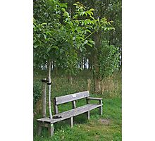 Secluded Bench Photographic Print