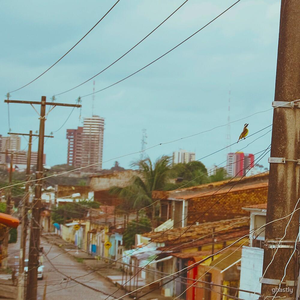 Rummingbird ii by ghastly