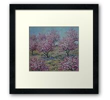 Apricot Trees Framed Print