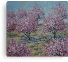 Apricot Trees Canvas Print
